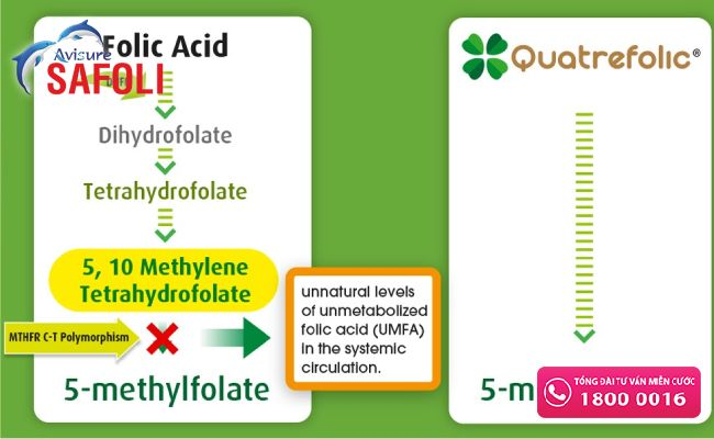 Chuyển hóa acid folic